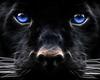 Тихая охота - последнее сообщение от Алексей