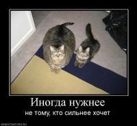 post-107-1287907644,92_thumb.jpg