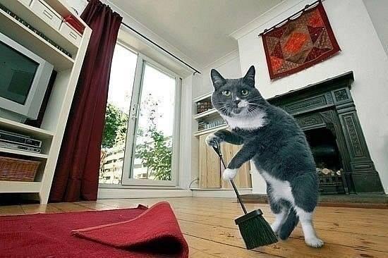 хочу такого кота.jpg