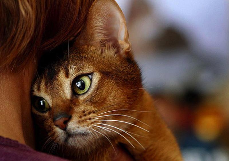 13 признаков того, что ваш кот без ума от вас.png