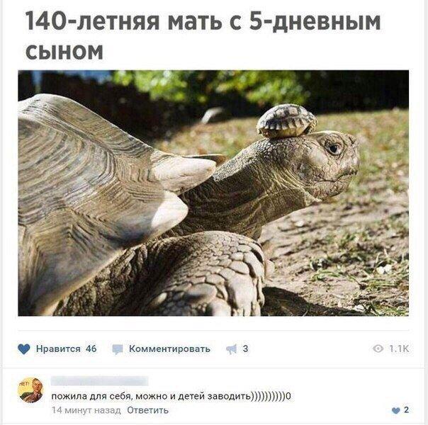 черепаха-мать.jpg