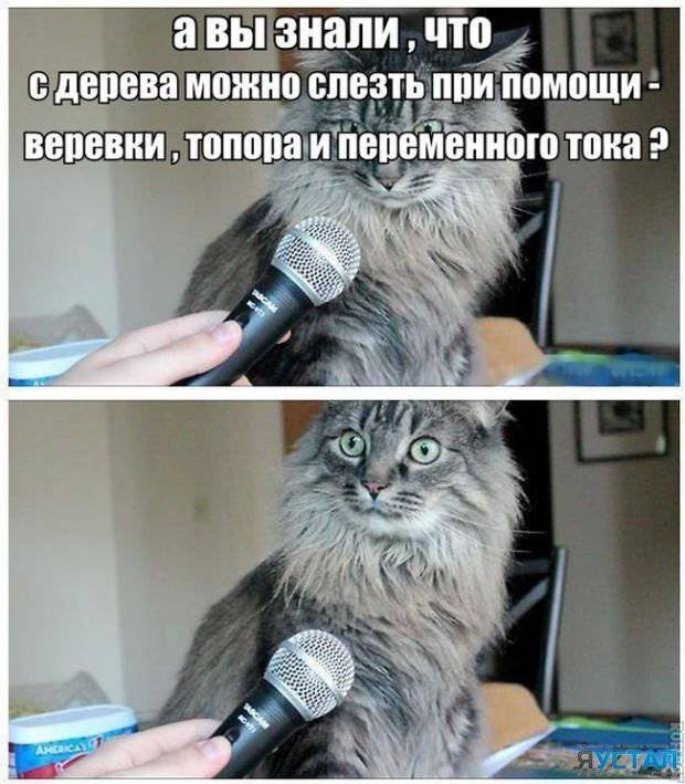 котик интервью.jpg