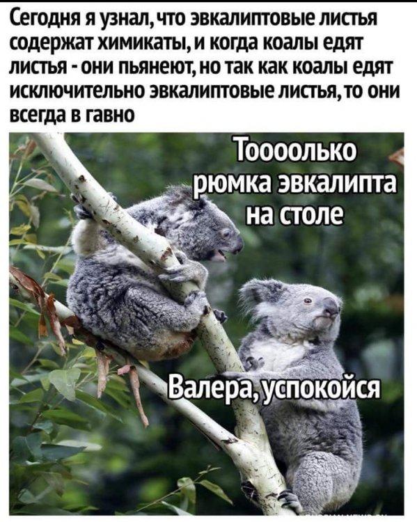 FB_IMG_1531598341682.jpg