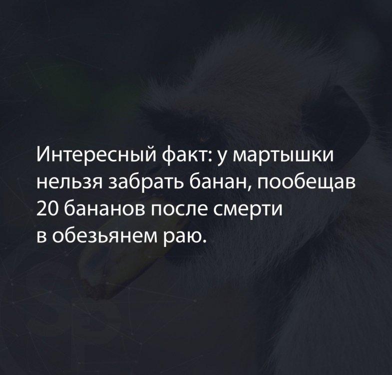 мартышка.jpg