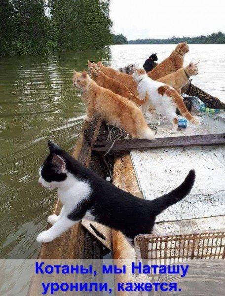 котаны.jpg